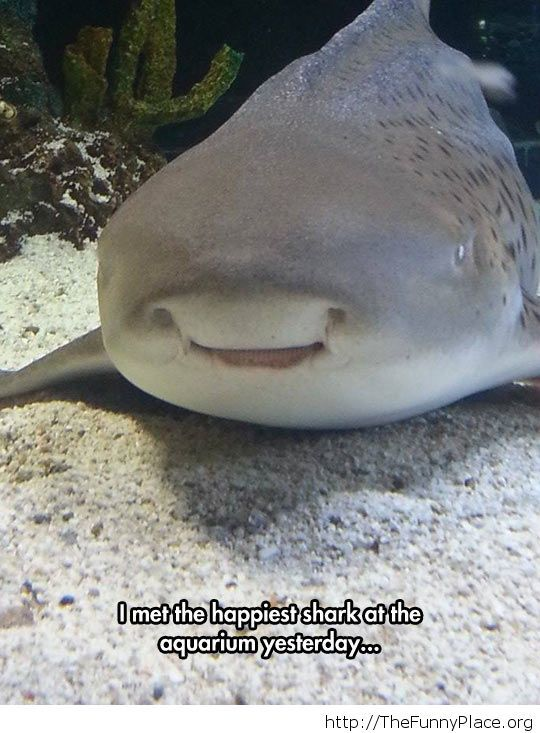 Very happy shark
