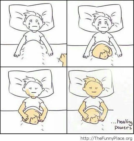 A cat's power