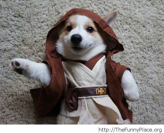 Adorable Jedi master