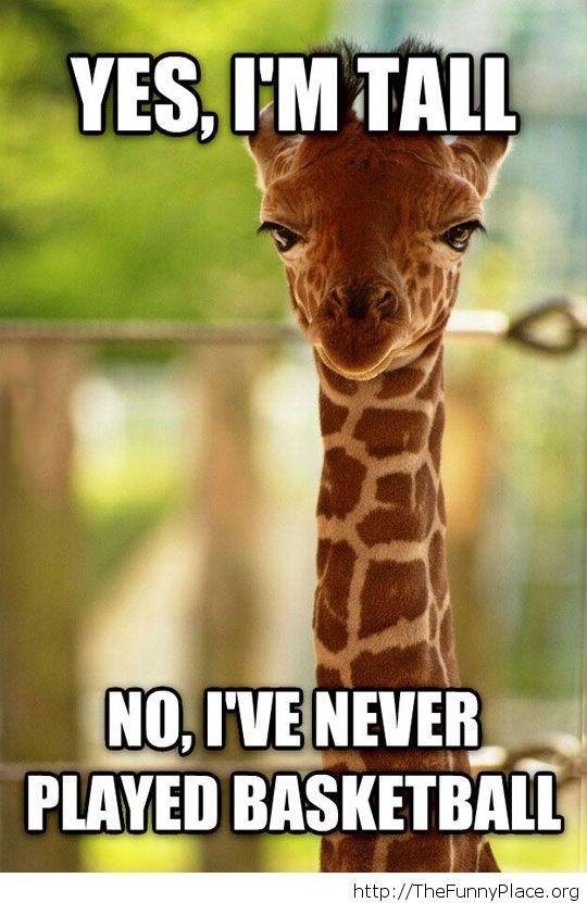Annoyed giraffe meme