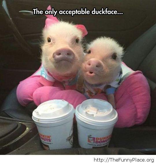 Cute baby pigs