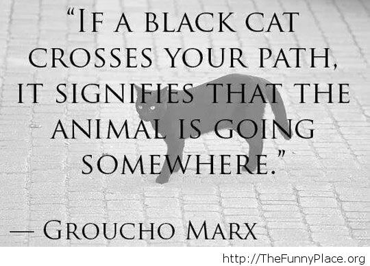 Funny black cat quote
