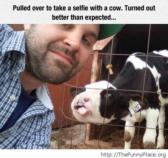 Funny cow selfie