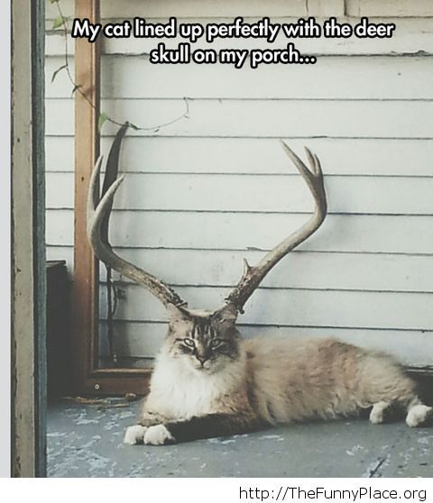 Nice deer you have there...