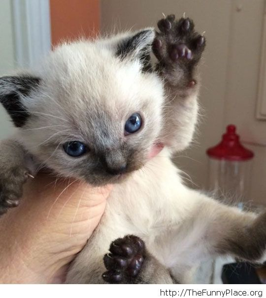Put me down this instant!