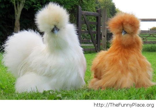So fluffy I'm going to die!