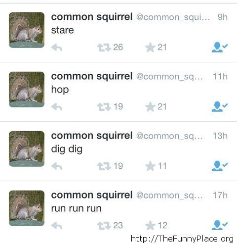 Twitter posts of a squirrel