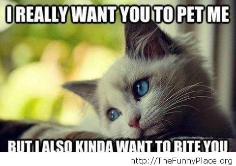 Cat problems meme