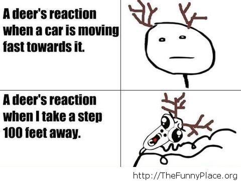 Funny deer logic