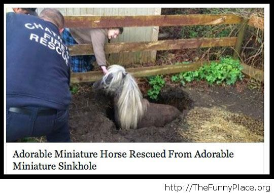 Funny news headline