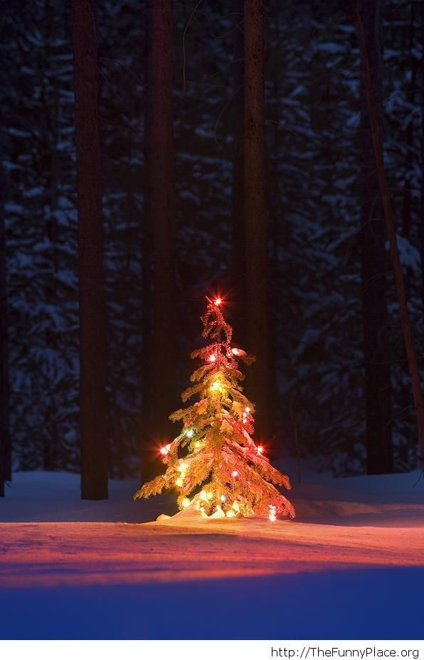 Lit Christmas tree in the forest