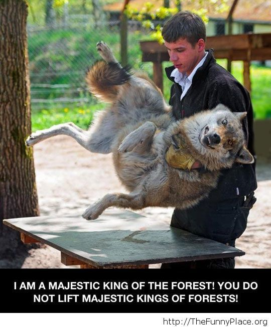 Poor King of the forest