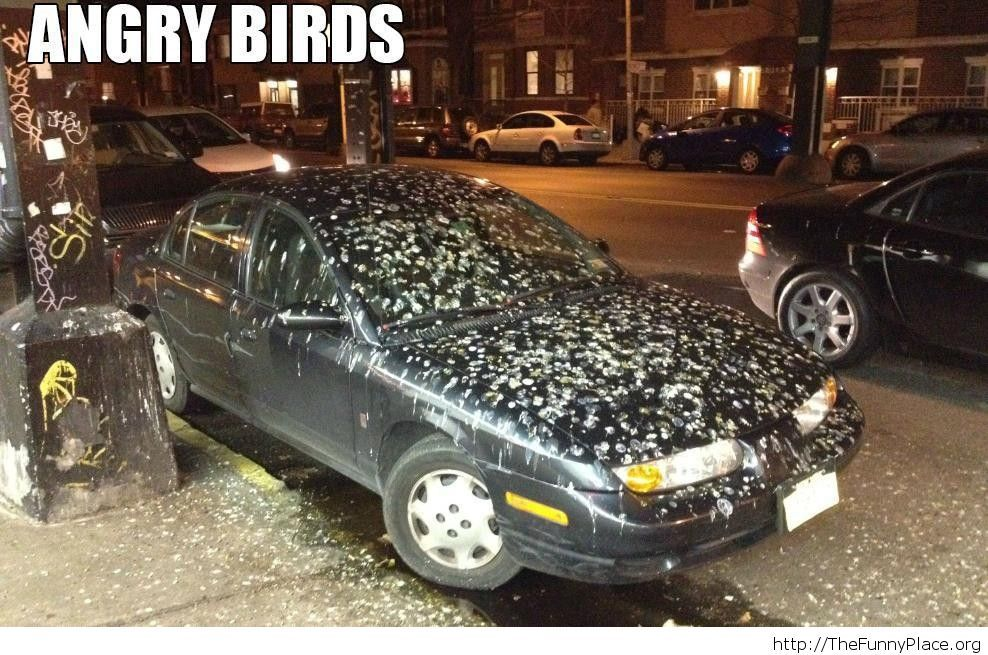 Those are some really angry birds