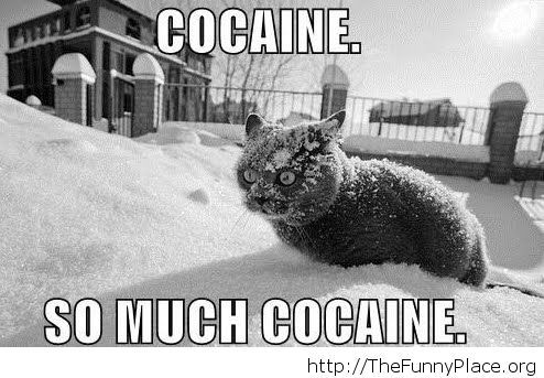 A cat's thoughts about snow
