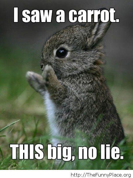 Cute bunny image
