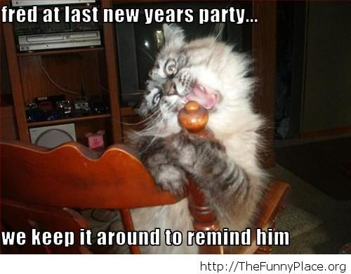 Funny New Year moments crazy cat