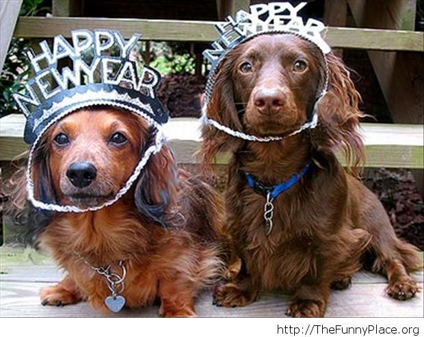 Funny New Year moments with dogs