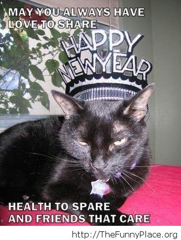 Funny New Year's resolution cat image
