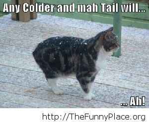 Funny cat cold winter saying