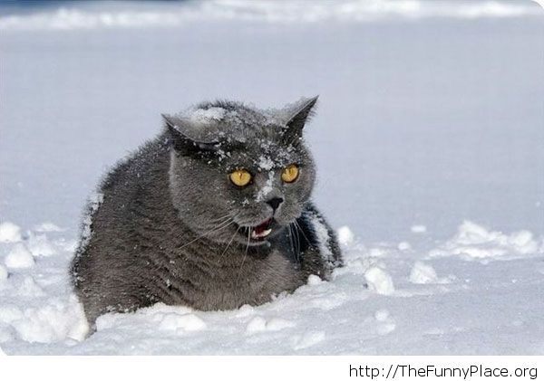 Funny cat in the snow image