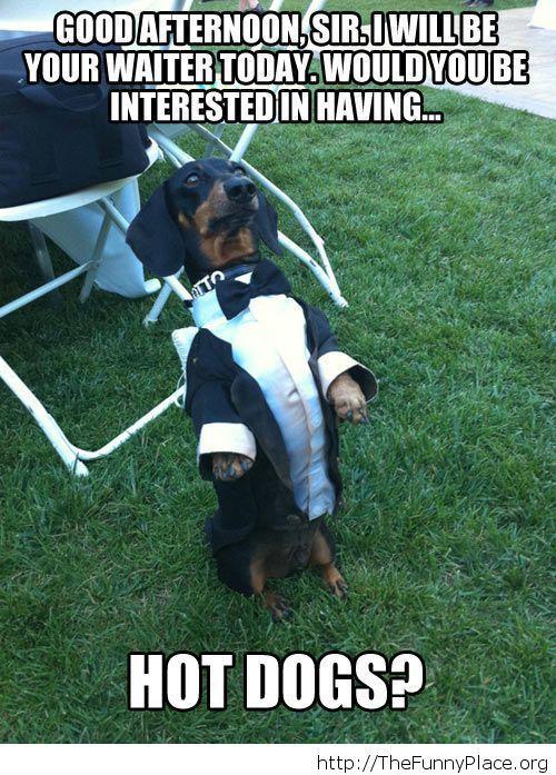 Funny dog waiter image