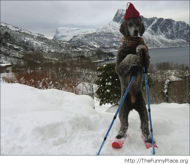 Funny dog winter image 2015