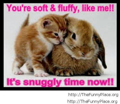 Funny fluffy friends