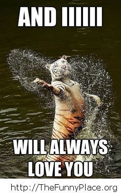Funny tiger in the water image
