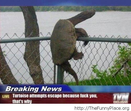 Hilarious news headline
