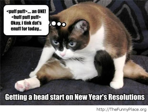 New Year moments cat crazy message
