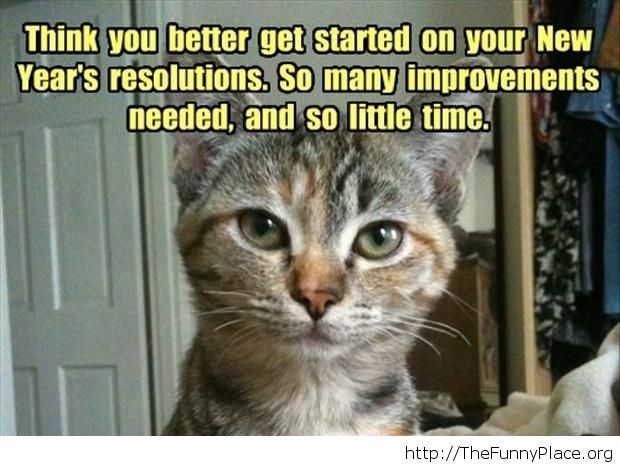 new year moments cat image saying