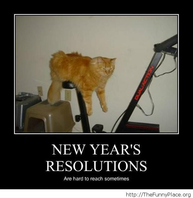 New Year's resolution cat image