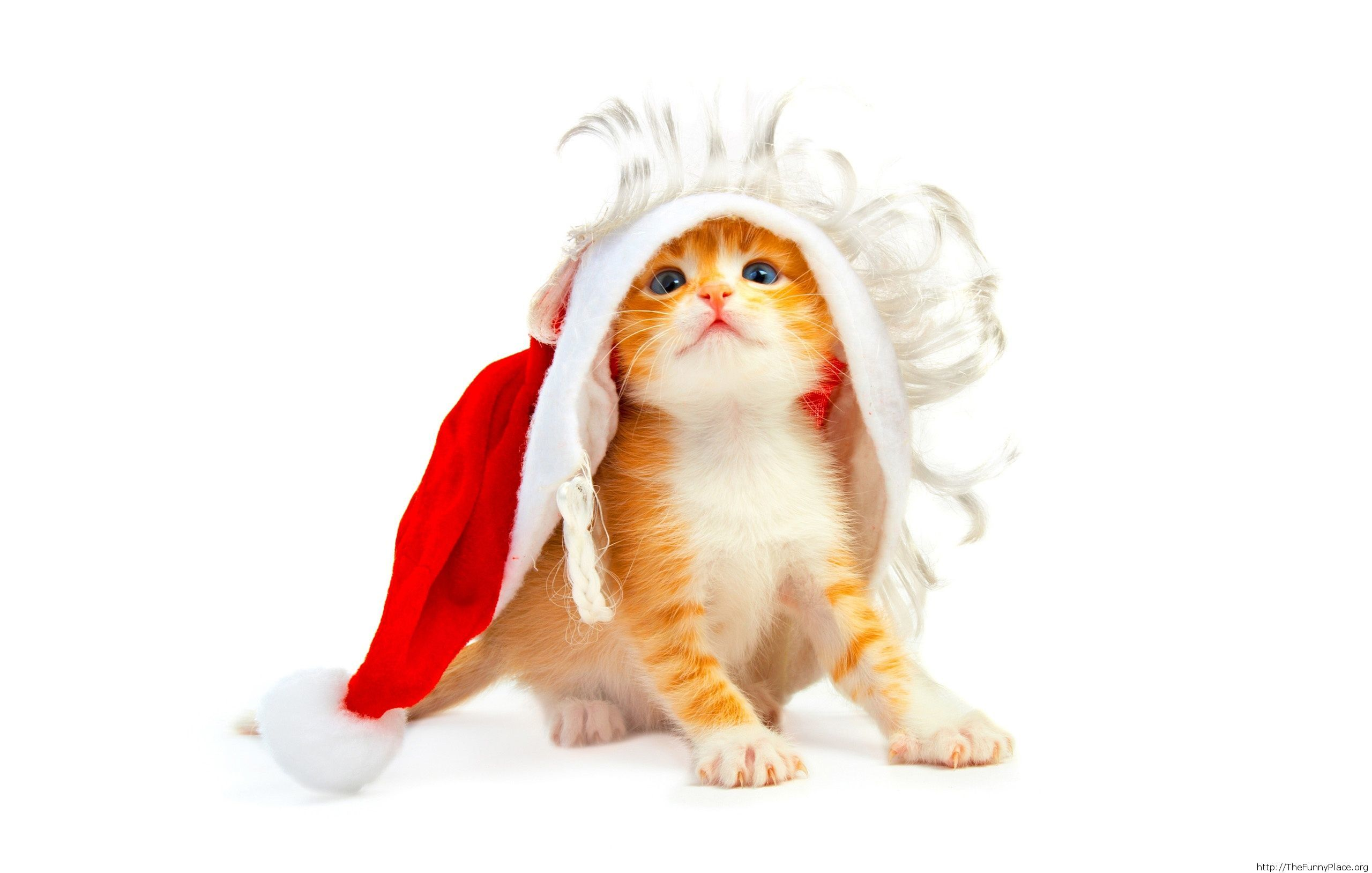 New Year's resolution from a little cute cat