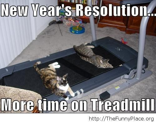 New Year's resolution funny cats image