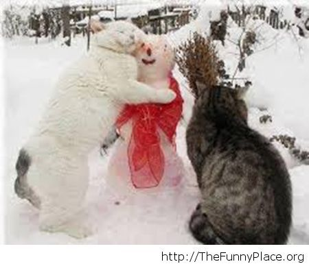 Some friendly cats winter image