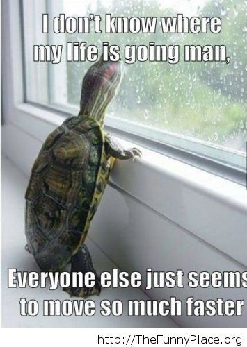 A depressed turtle image...