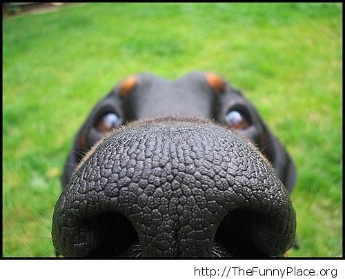 Behind the dog nose
