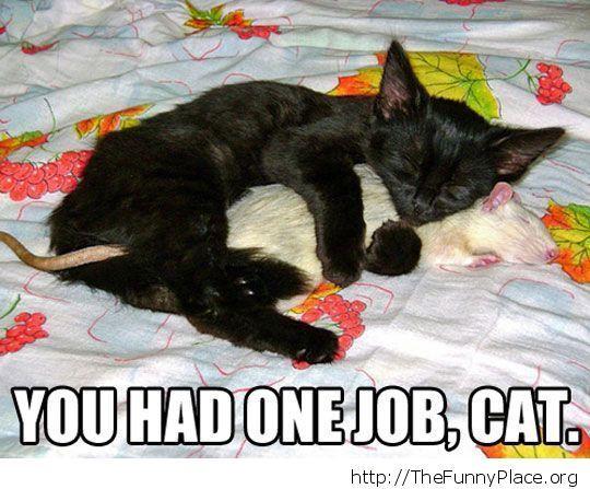 Cat - One job