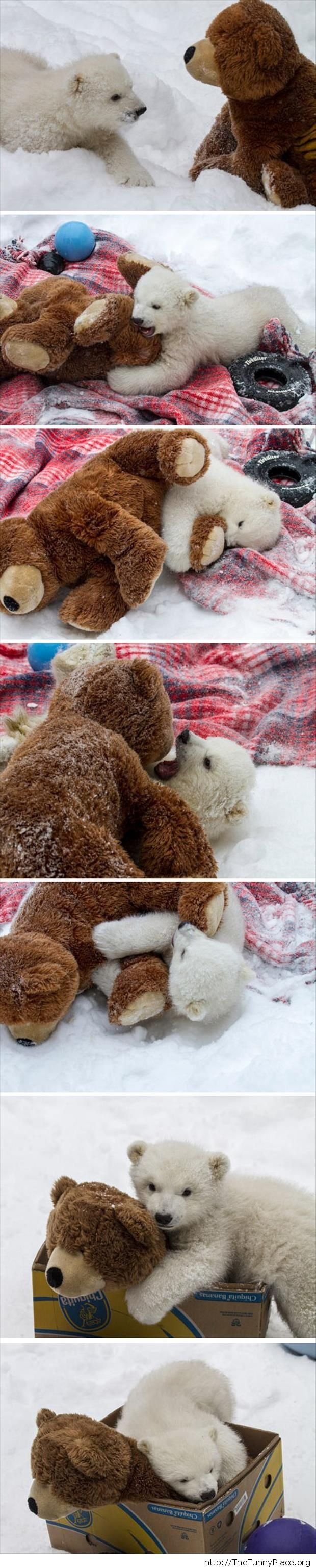 Cute baby bear playing