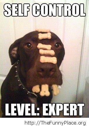 Dog - Self control expert
