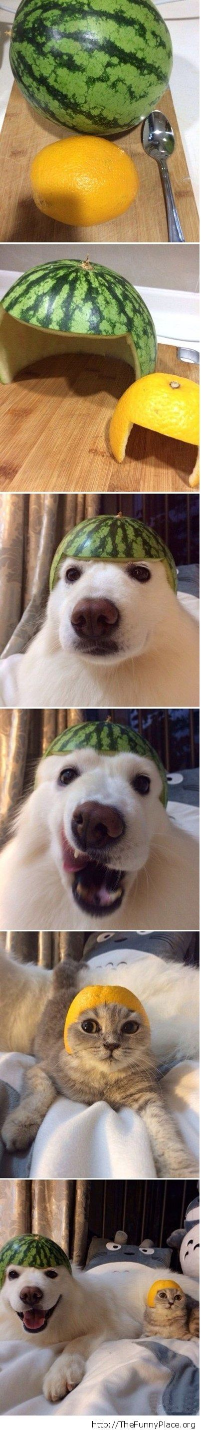 Dog and cat wearing funny hats