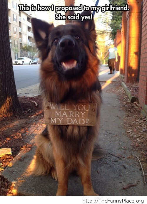 Dog helps with marriage proposal