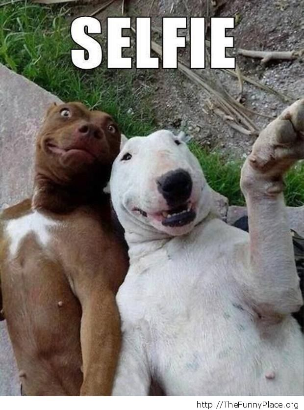 Dogs - Selfie