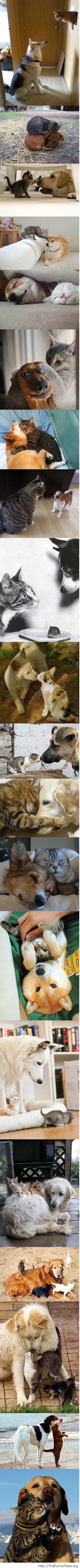 Dogs and cats - Best friends