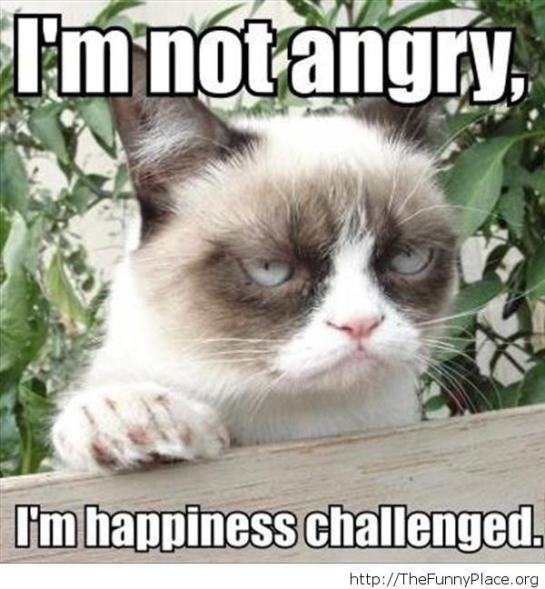 Funny Grumpy cat meme message