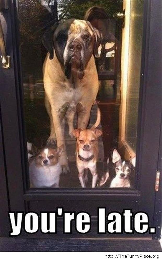 Funny dogs waiting