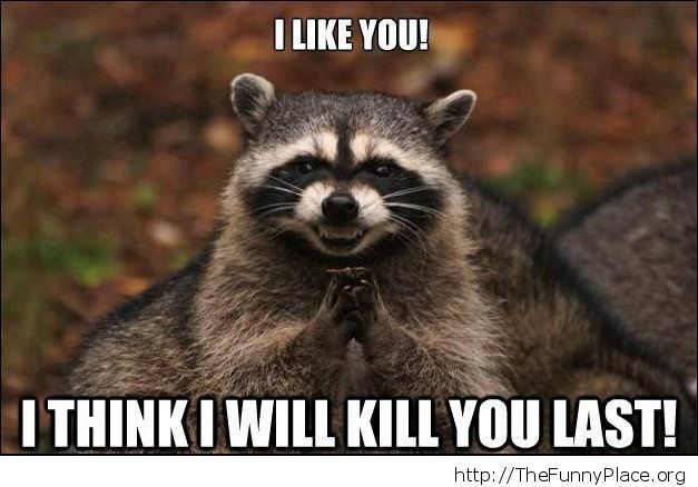 Funny killer racoon