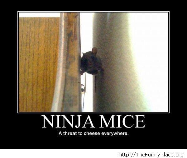 Funny ninja mouse