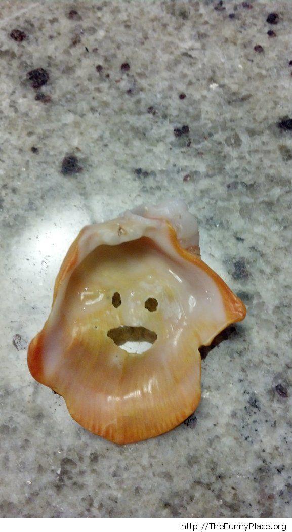 Funny shell shape