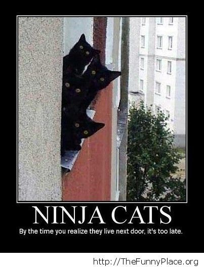 Funny shinobi cats